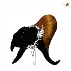 Coil – Black Antlers