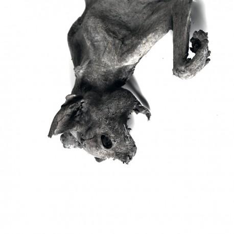 Nordvargr – Metempsychosis (Vinyl, LP, Album, Clear)